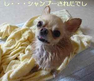 blog2008091104.jpg