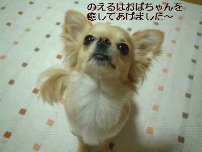 blog2008091801.jpg