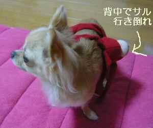 blog2008091906.jpg