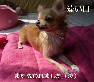 blog2008092003.jpg