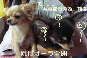 blog2008092202.jpg