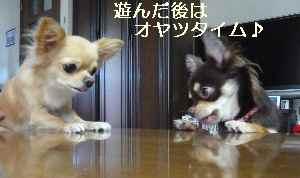 blog2008092204.jpg
