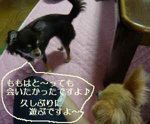 blog2008092206.jpg
