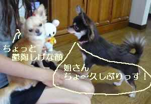 blog2008092208.jpg