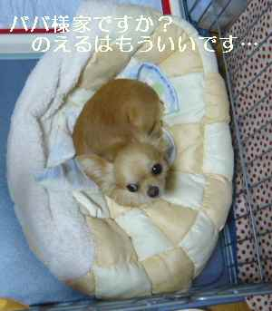 blog2008092501.jpg
