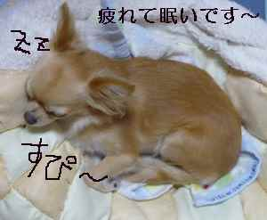 blog2008092502.jpg