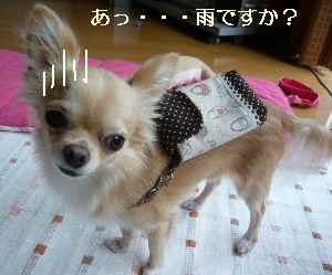blog2008092602.jpg