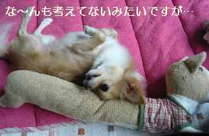 blog2008092801.jpg
