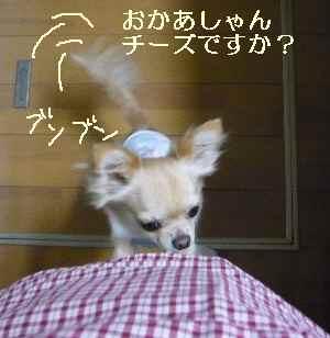 blog2008092905.jpg