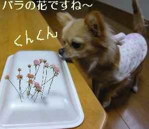 blog200809301.jpg