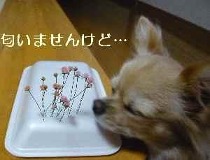 blog200809302.jpg