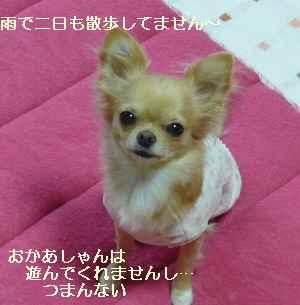 blog200809304.jpg