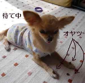 blog2008100303.jpg