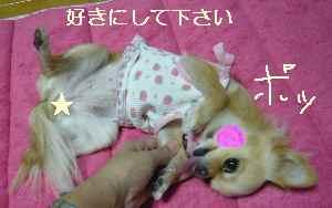 blog2008100503.jpg
