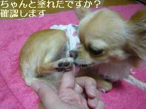 blog2008100504.jpg