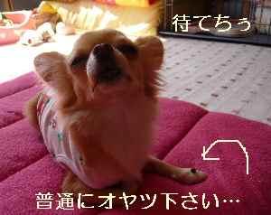 blog2008100902.jpg