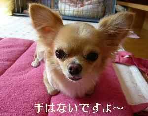 blog2008100903.jpg