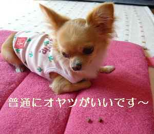 blog2008100904.jpg