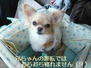 blog2008101302.jpg