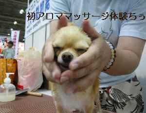 blog2008101304.jpg