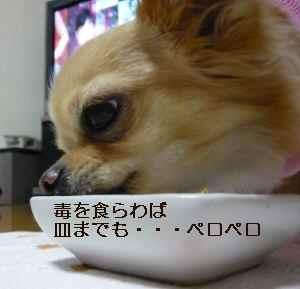 blog2008101409.jpg