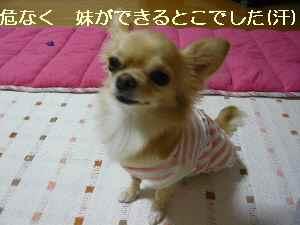 blog2008101702.jpg