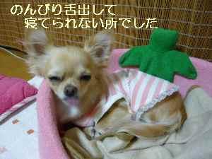 blog2008101703.jpg