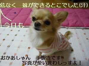 blog20081018.jpg