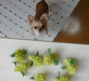 blog2008102101.jpg