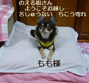 blog20081022010.jpg