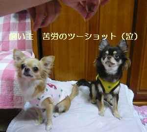 blog20081022011.jpg