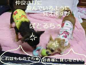 blog20081022012.jpg