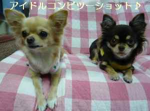 blog20081022013.jpg