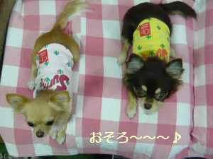 blog20081022014.jpg