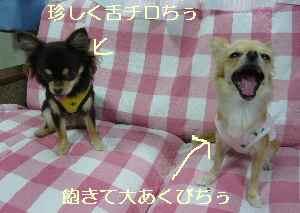 blog20081022015.jpg