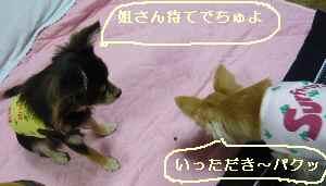 blog2008102204.jpg