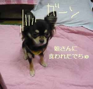 blog2008102205.jpg