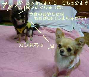 blog2008102207.jpg