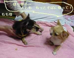 blog2008102208.jpg