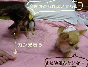 blog2008102209.jpg