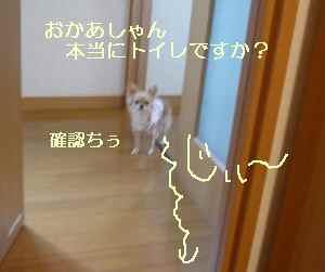 blog2008102301.jpg