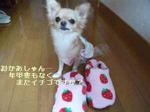 blog2008102404.jpg