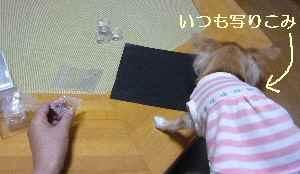 blog2008102601.jpg
