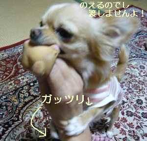 blog2008102605.jpg