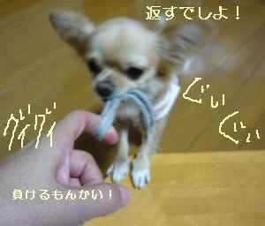 blog2008102702.jpg