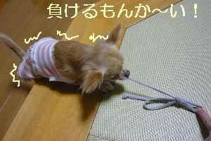 blog2008102703.jpg