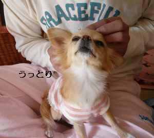 blog2008110501.jpg
