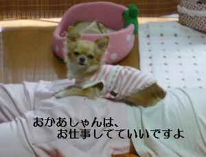 blog2008110502.jpg