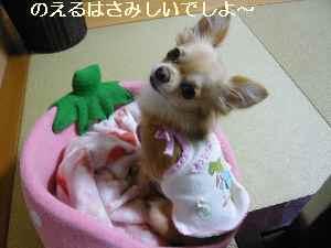 blog2008110601.jpg