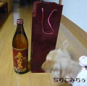 blog2008111001.jpg